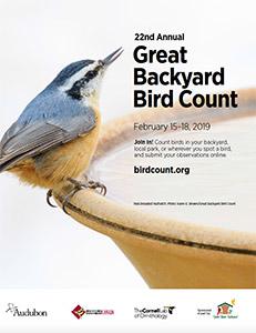 Great Backyard Bird Count 2019 - Evergreen Audubon ...